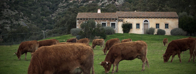 farmhouse for incentives